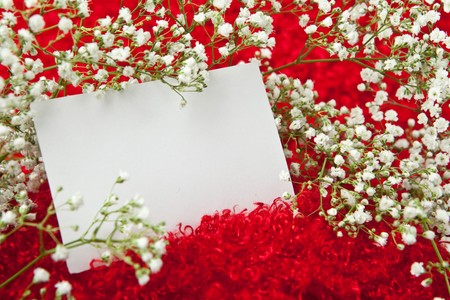 shaggy: Blank invitation card in white flowers on shaggy red fabric