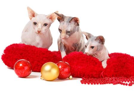 Three sphinx cats looking at Christmas balls photo
