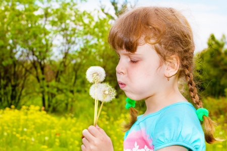 Girl with braids blowing at the dandelion photo