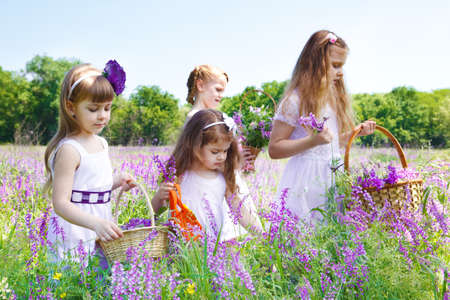 Four preschool girls in white dresses gathering flowers photo