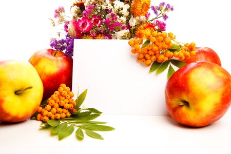 Autumnal greeting card with red and yellow apples, flowers and ash berries