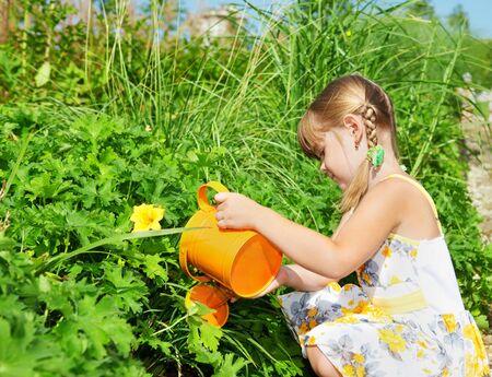 Preschool girl watering plants photo
