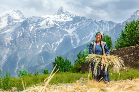 agriculture india: Smiling mature woman with a bunch of wheat, in Himalaya mountains