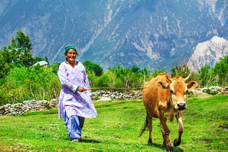 Elderly woman and a cow in the mountains photo