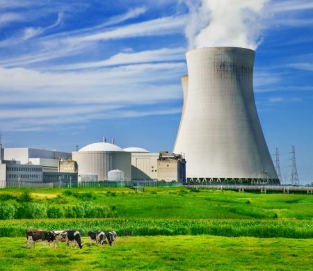 Vaches au pâturage près d'une centrale nucléaire