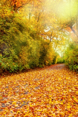Fall foliage in a park Stock Photo