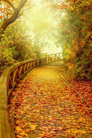 road autumnal: Stairs covered with golden leaves in a park  Autumn in Prague, capital of Czech Republic