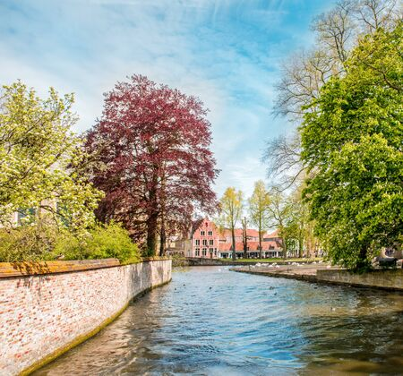 Canal in Bruges, Belgium, with historical buildings and famous swans in the background Foto de archivo