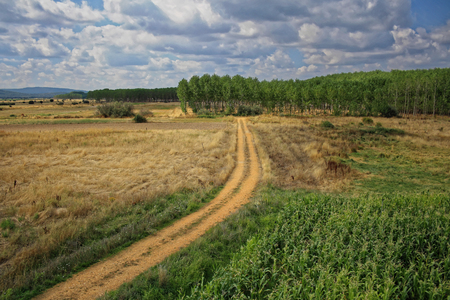 dirt road in the field 写真素材