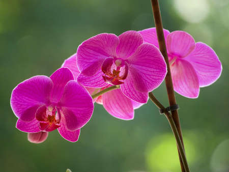 Purple orchids on a blurred background.