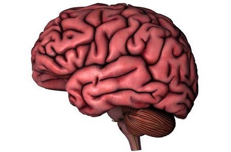 Human brain lateral view graphic on white background
