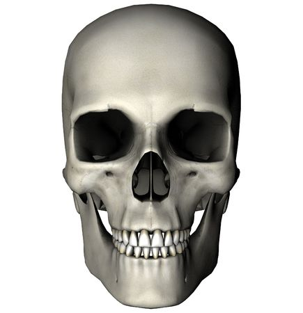 Human skull anterior view graphic on white background