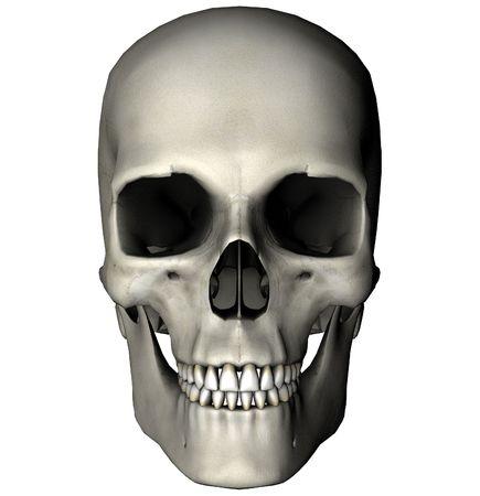 Menselijke schedel anterior weergave afbeelding op witte achtergrond