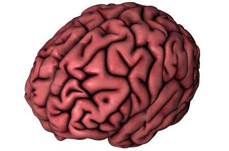 Menselijk brein schuin oog anatomische 3D grafische op witte achtergrond Stockfoto