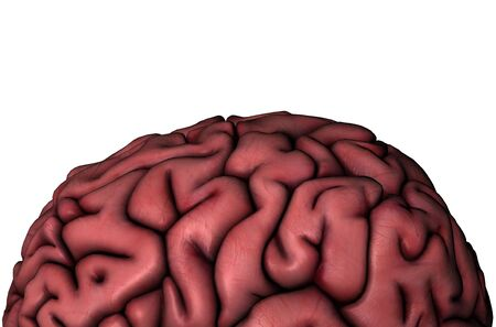 Human brain gyri close-up anatomical view 3D graphic on white background