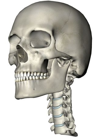 herniated: Human skull and cervical spine (neck) oblique anatomical 3D illustration on white background Stock Photo