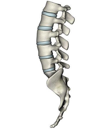 Human laterale lumbosacral wervelkolom Stockfoto