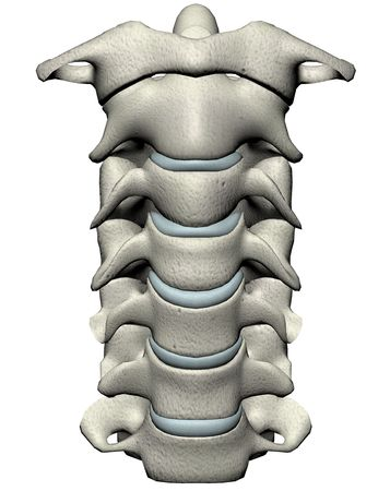 Human cervical spine anterior anatomical 3D illustration on white background Stok Fotoğraf