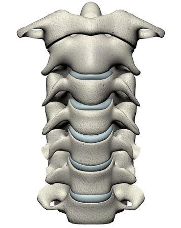 Menselijke cervicale wervelkolom anterieure anatomische 3D-afbeelding op een witte achtergrond Stockfoto