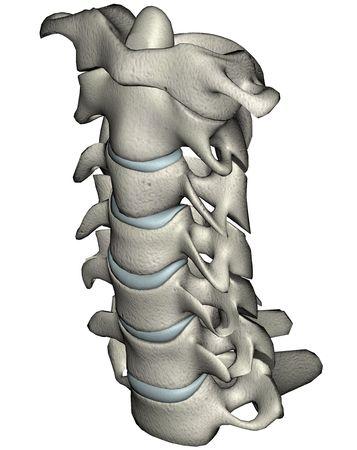 Menselijke cervicale wervelkolom anterieure schuine anatomische 3D-afbeelding op een witte achtergrond Stockfoto - 2257410