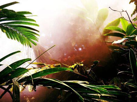 霧深く、暖かい熱帯雨林シーン。
