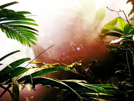 A warm, misty rainforest scene.