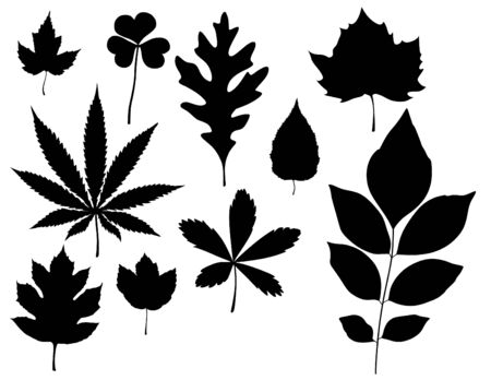 a set of 9 solid black isolated leaf graphics