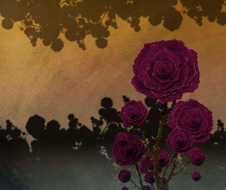 柔らかな光で美しいガーデン ベッドのバラの絵 写真素材