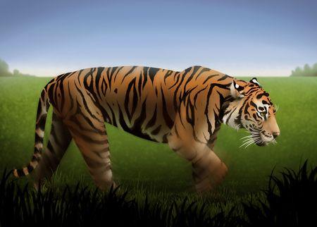緑の芝生のフィールドを介してストーカー、オレンジ色の虎の絵