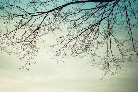 leafless: leafless tree add vintage color Stock Photo