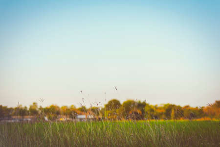 resound: Beautiful  Abstract  Grass flowers on clear sky add vintage color, retro style for background Stock Photo