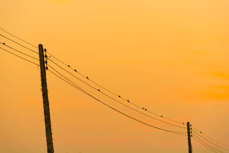 birds on a wire: Sunset sky and Silhouette Birds on wire Stock Photo