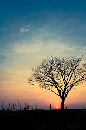 sunlight sky: Silhouette Lonely Man in garden, beautiful sunset and leafless tree