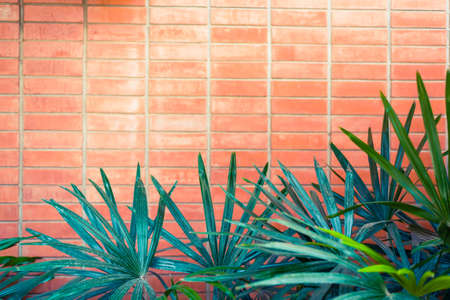 red brick: Lady Palm leaves on Old Red brick wall