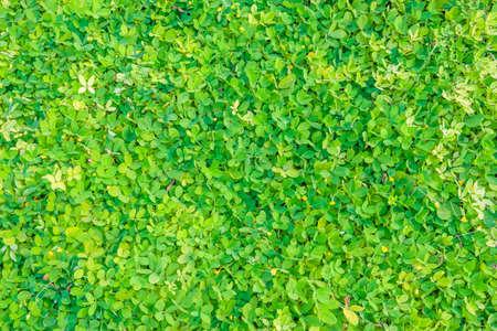 Beau motif de feuilles vertes