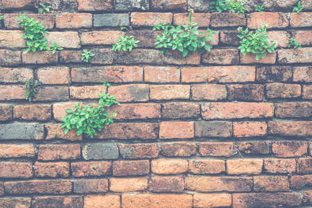plaster wall: Old brick wall and small green plant
