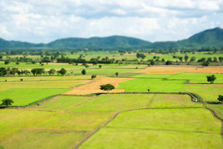 Top view of green rice fields and blue sky in Thailand