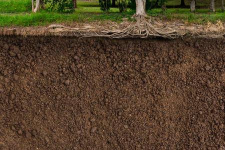 nature photo: Soil texture background