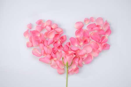 vegetative: Pink roses