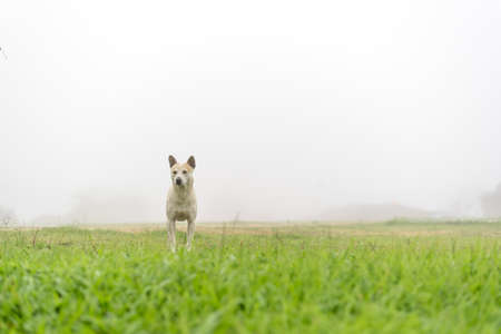 Dog in fog at green meadow Stock Photo
