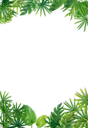 녹색 잎 테두리 배경