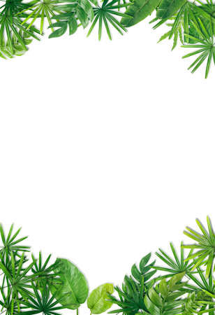 Green leaf border background