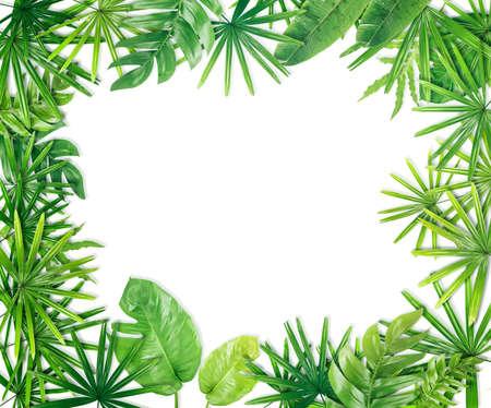 Green leaf border background
