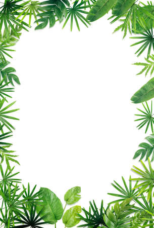 Green leaf border background Stock Photo - 69562663