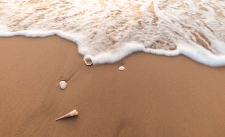 sea shells on the beach motion blur wave