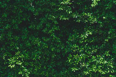 Dark green leaves background Banque d'images