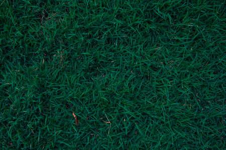 Closeup dark green grass texture