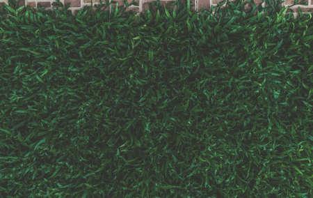 Dark green grass background texture