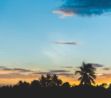 Sunset sky with coconut tree Banque d'images