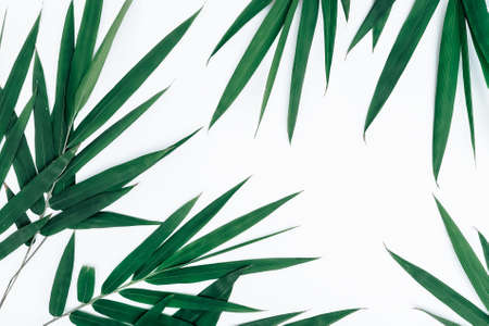 Bamboo dark green leaves on white background Banque d'images